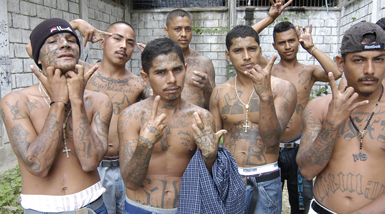 Image result for illegal immigrant gangs